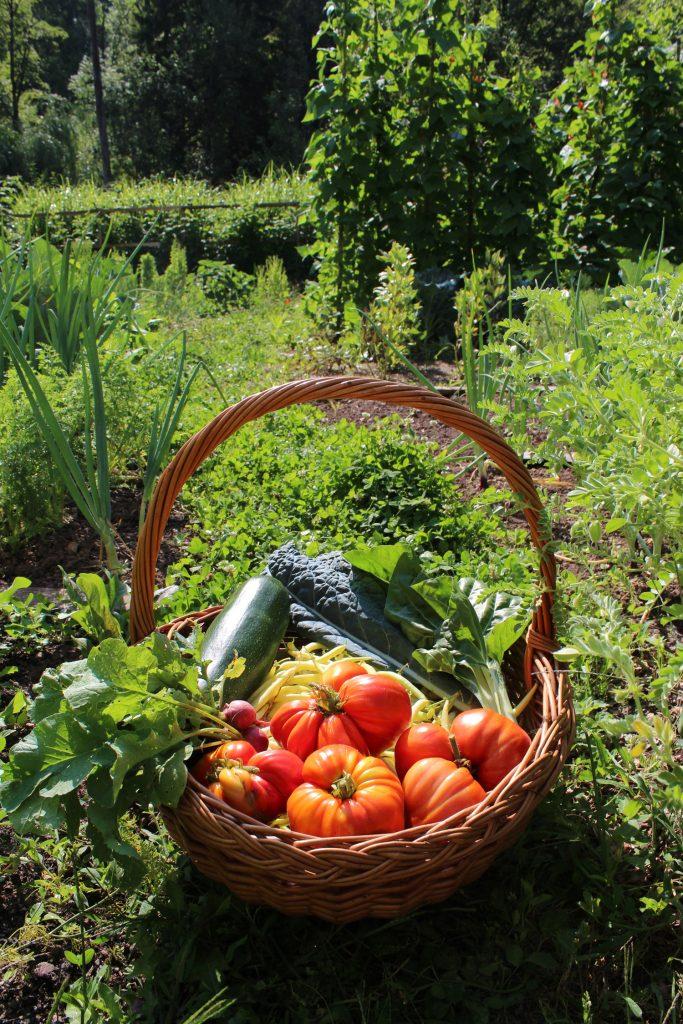 domači pridelki vrt vrtičkanje hiša ob gozdu kako začeti z vrtom