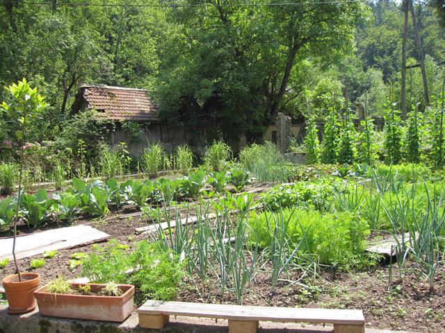 zasaditev vrta kako začeti vrt