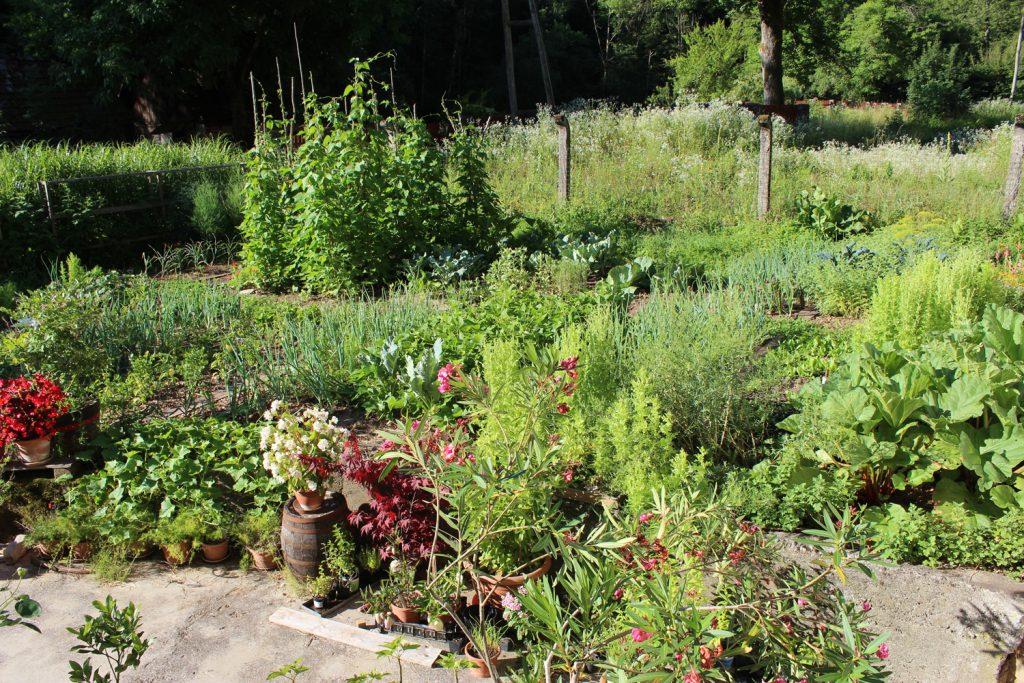 kako začeti z vrtom vrtičkati