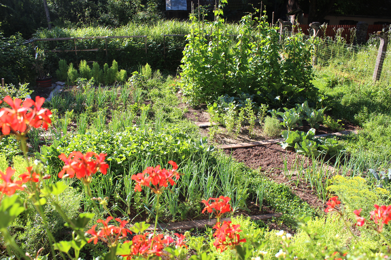 slovenski moj vrt vrtnarjenje vrtičkanje kako začeti prvi vrt hiša ob gozdu
