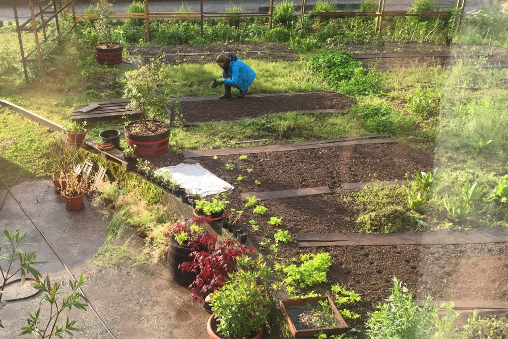 sajenje sejanje vrta zasaditev kako začeti vrt
