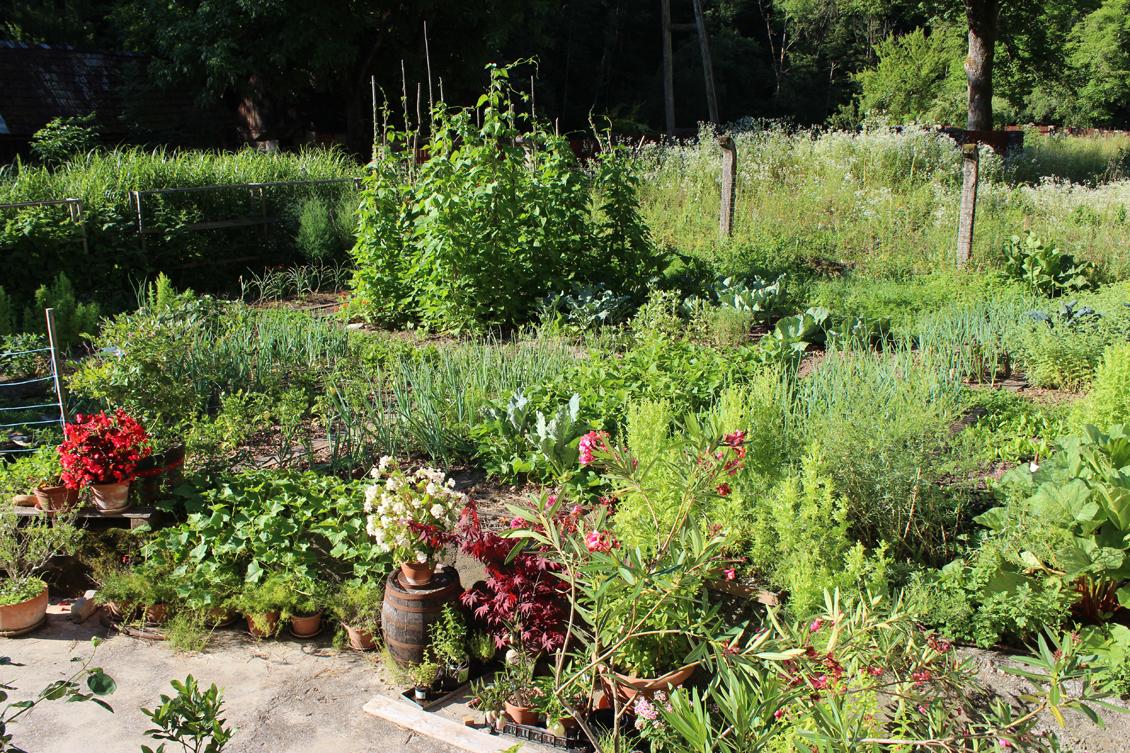 eko slovenski vrt vrtiček kako vrtnariti
