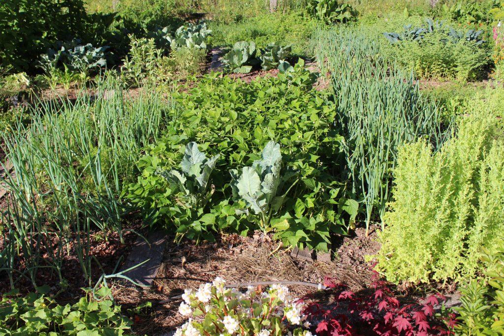 vrt brez prekopavanja vrtičkanje permakultura biodinamika hiša ob gozdu