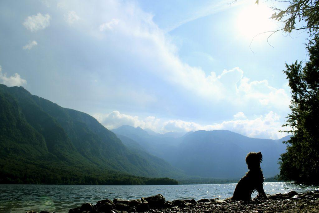 pes izlet v bohinj bohinjsko jezero