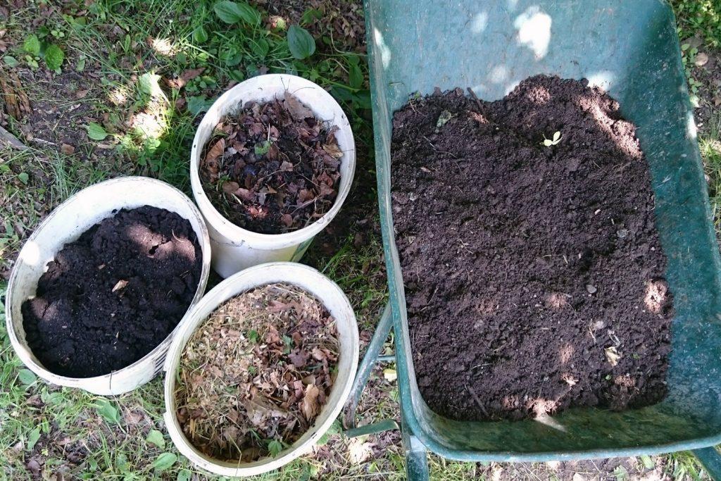 sajenje gojenje paradiznika v loncih