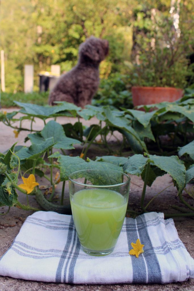 kumarična voda recept lagotto romagnolo pes