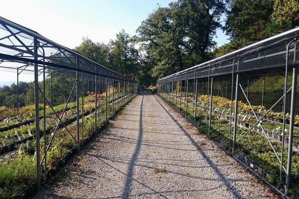 trajnice golob-klančič obisk vrtnarija slike