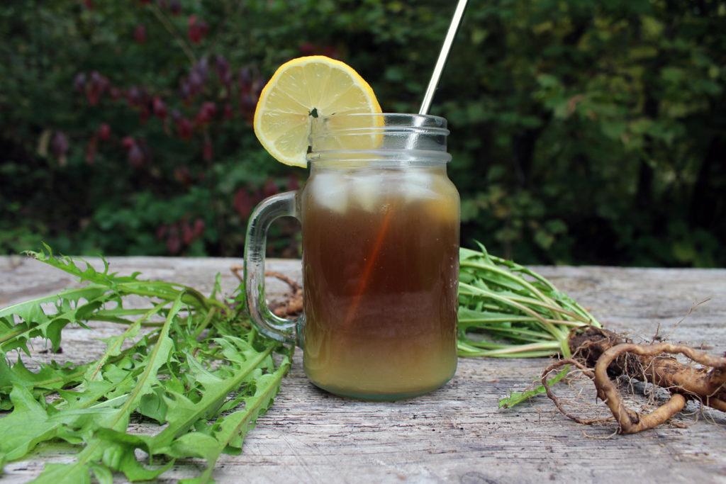 regratova korenina regratov ledeni čaj recept uporaba korist