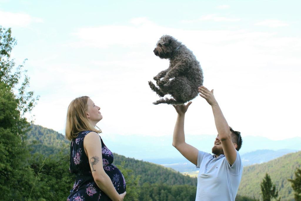 nosečnost pes lagotto romagnolo