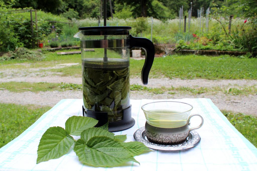 čaj iz malinov listov nosečnost nosečniški čaj priprava kje kupiti