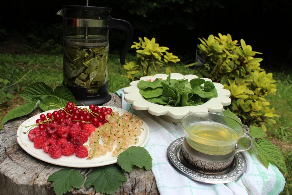 nosečnost čaj iz malinovi listov jagodičevje špinača