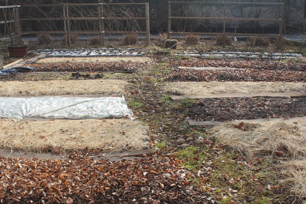 vrt zastirka brez prekopavanja samooskrba hisa ob gozdu