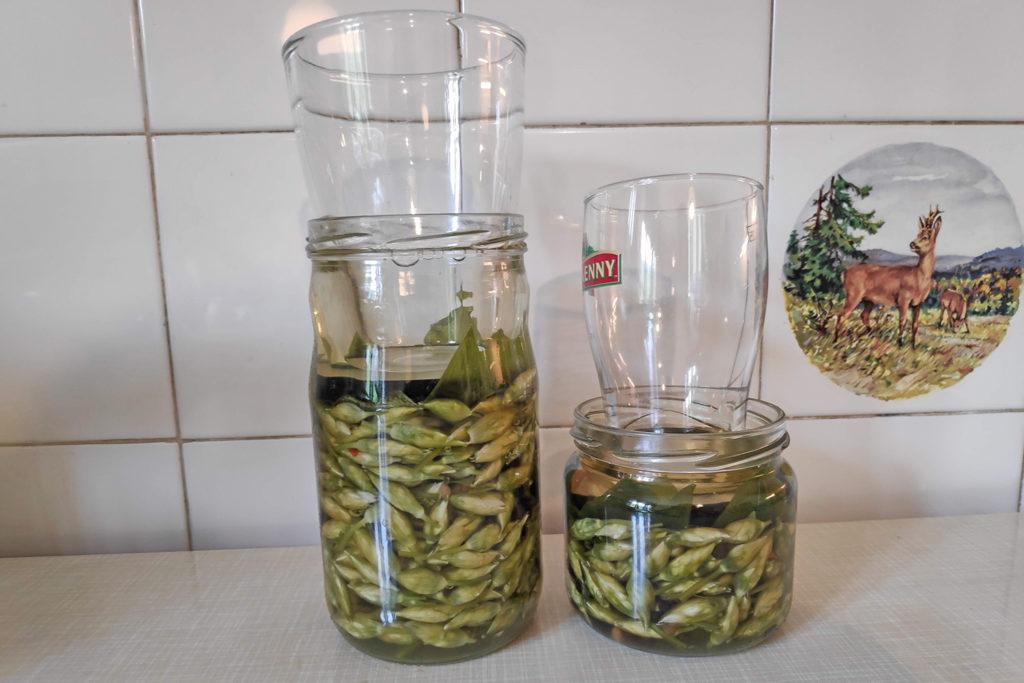 fermentirani čemaževi popki obteženi slanica priprava kisaje v kozarcu